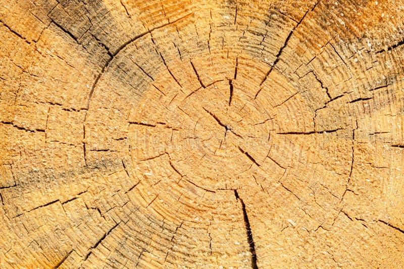 被锯的杉木 免版税库存照片