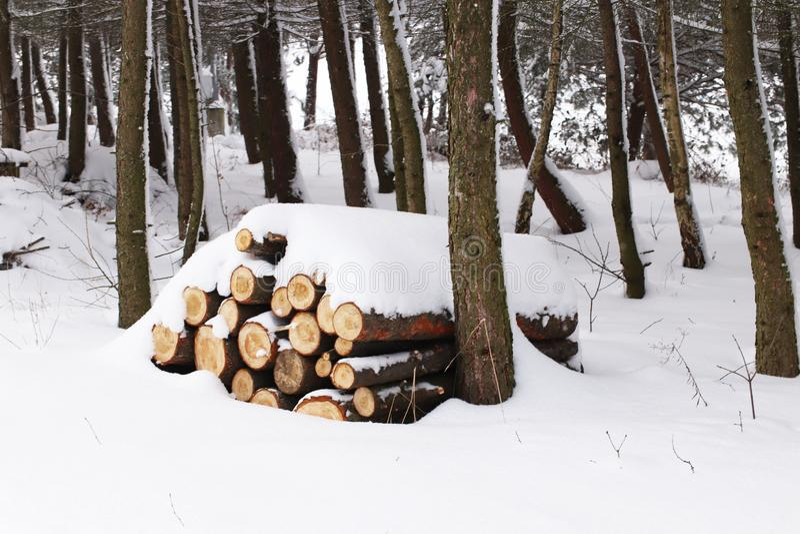 被锯的树砍成日志并且被折叠入金字塔洒与雪 冬天收获木头在杉木森林冷的海 免版税库存照片