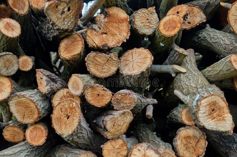 被锯的树 库存图片