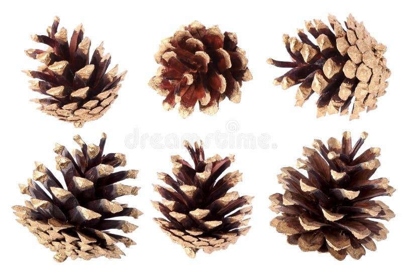 被镀金的杉木锥体-圣诞节装饰 库存图片