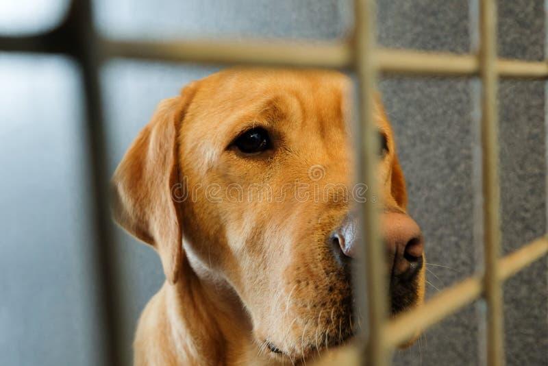 被附寄的狗 免版税库存图片