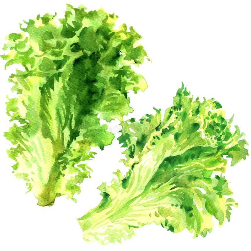被隔绝的两片新鲜的绿色莴苣沙拉叶子,在白色的水彩例证 向量例证