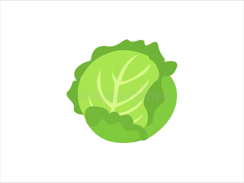被隔绝的嫩卷心菜菜 农厂市场的圆白菜 向量例证