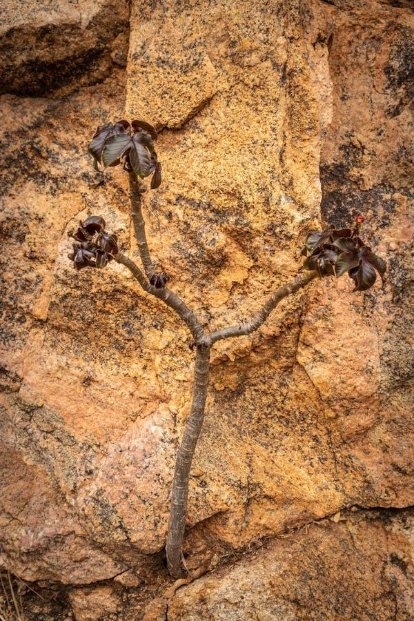 被隔绝的小树显示自然的力量 图库摄影