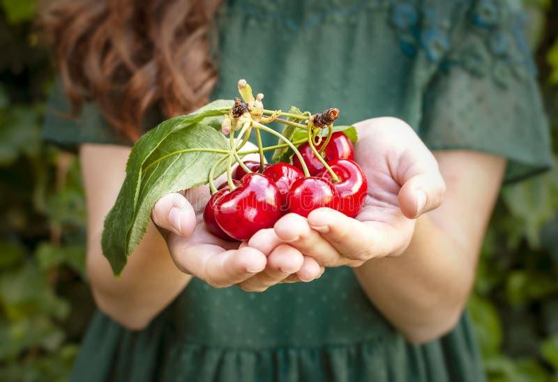 被隔绝的年轻女人在她的手上的拿着有些樱桃 与叶子和茎的大红色樱桃 背景的一个人 库存图片