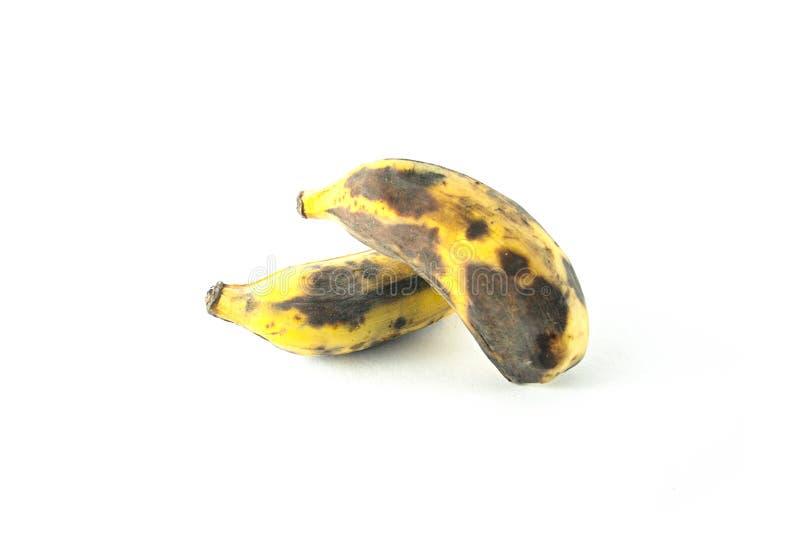 被隔绝的成熟耕种的香蕉 库存图片