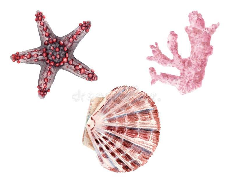 被隔绝的手拉的水彩套壳和蛤蜊 库存例证