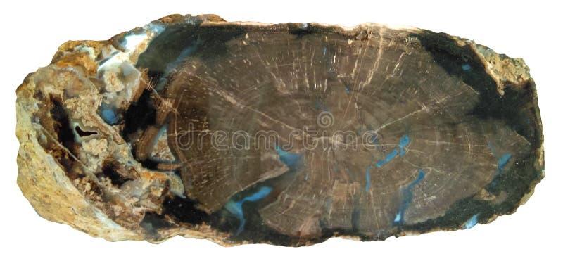 被隔绝的木石化 库存照片