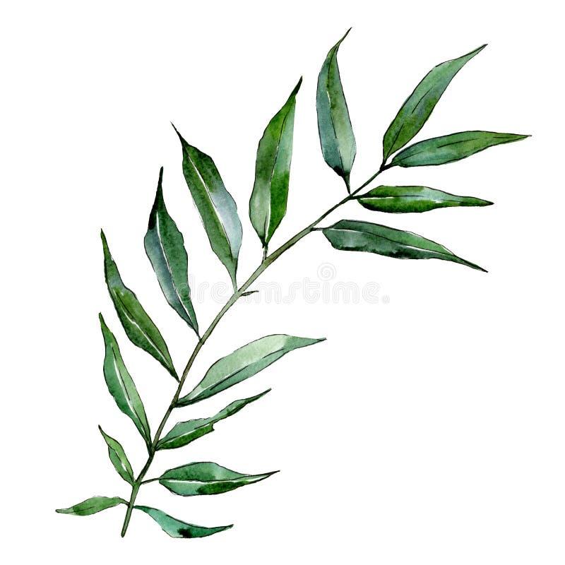 被隔绝的杨柳分支例证元素 水彩背景例证集合 绿色叶子 库存例证