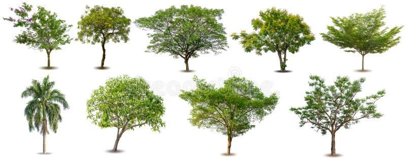 被隔绝的树的汇集在白色背景,在白色背景隔绝的套的绿色树 免版税图库摄影