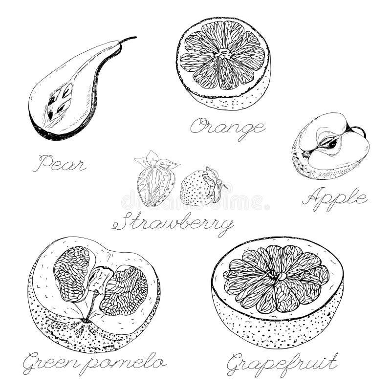 被隔绝的概述果子黑在白色背景 库存例证