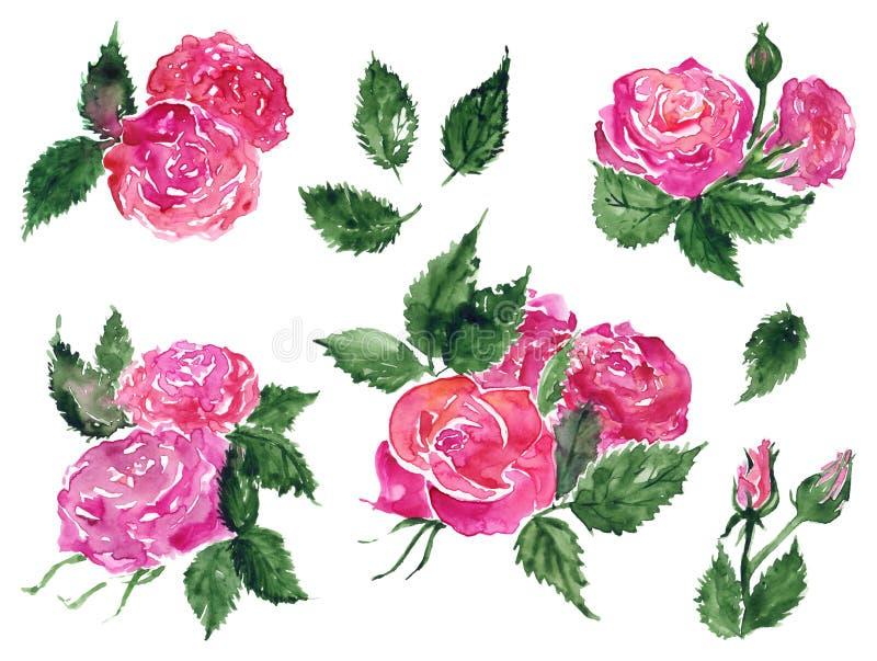 被隔绝的水彩桃红色红色玫瑰花绿色叶子植物手拉的剪贴美术集合 向量例证
