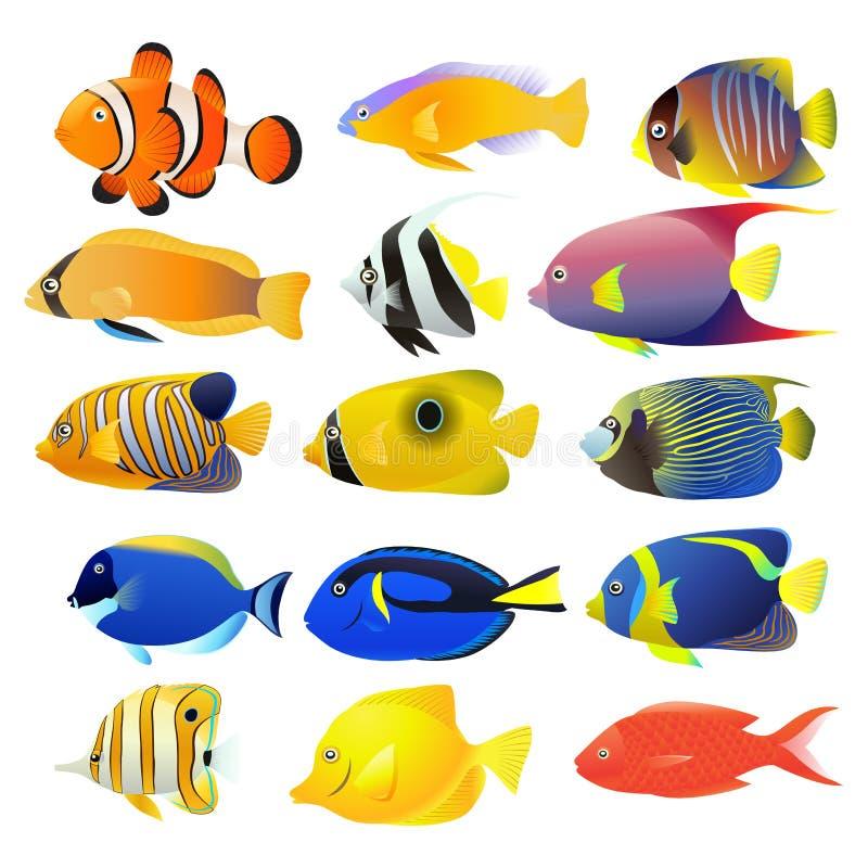 被隔绝的海鱼收藏 向量例证