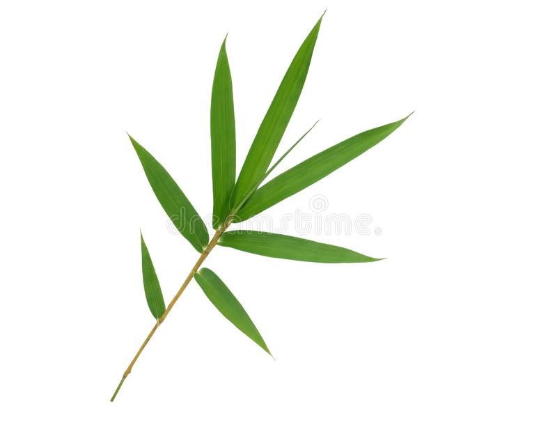 被隔绝的竹叶子 免版税图库摄影