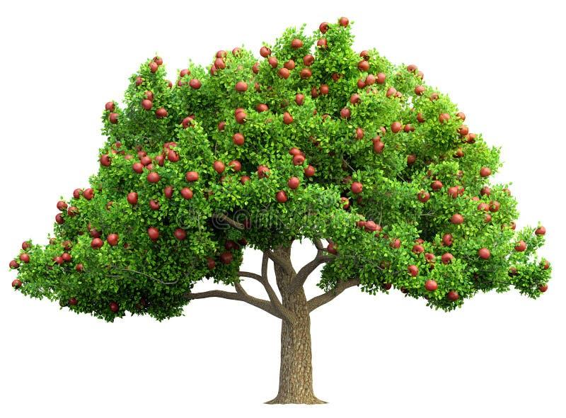 被隔绝的红色苹果树 皇族释放例证