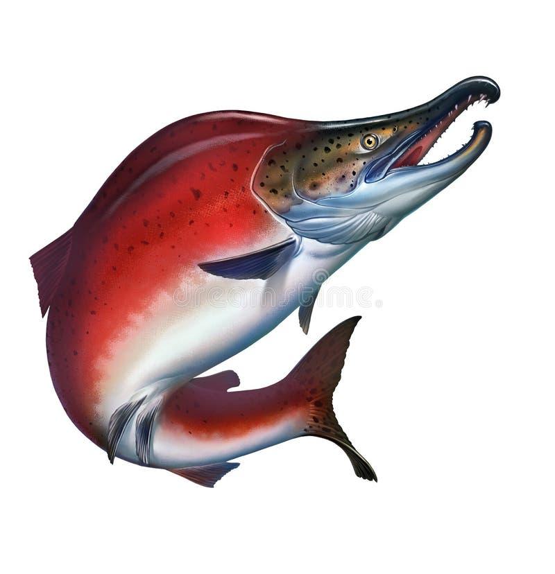 被隔绝的红鲑鱼现实例证 免版税库存图片