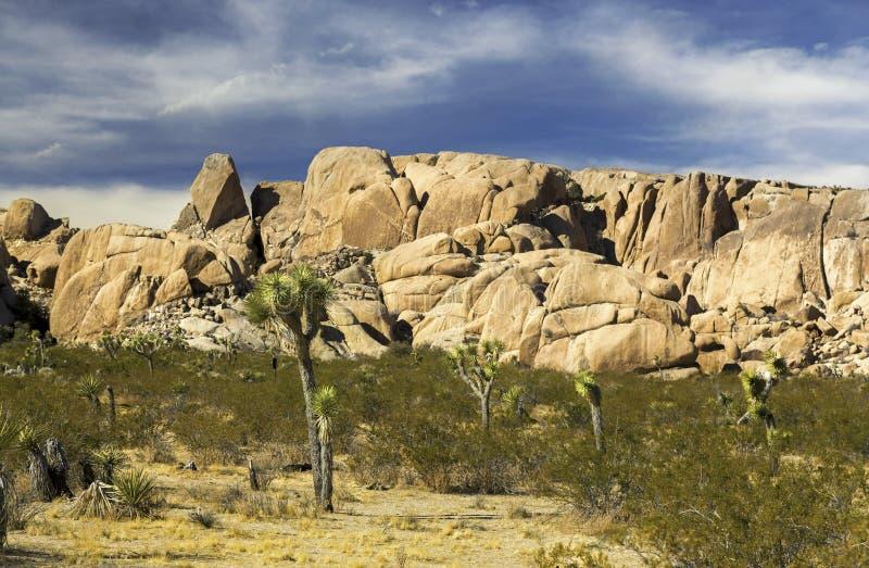 被隔绝的约书亚树国家公园加利福尼亚地面蛇沙漠 免版税库存照片