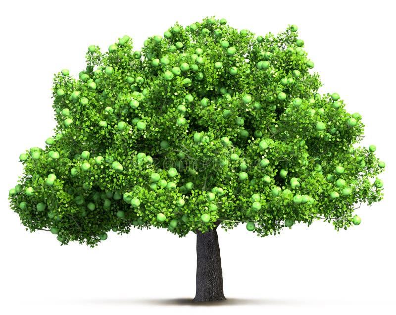 被隔绝的绿色苹果树 向量例证