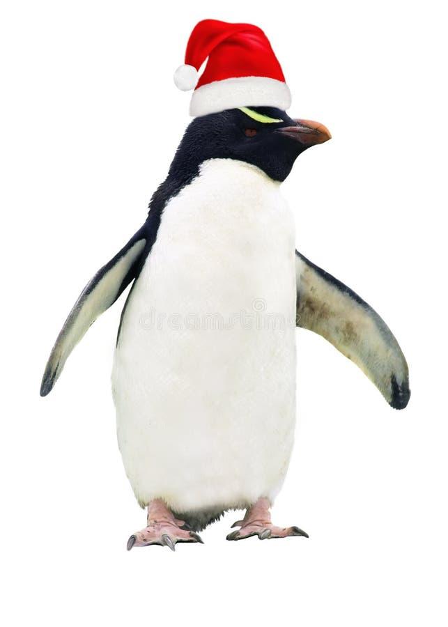 被隔绝的肮脏的企鹅 免版税库存照片