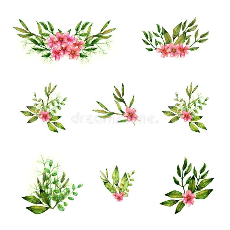 被隔绝的花对象美好的夏天五颜六色的开花的桃红色花卉水彩油漆绿色叶子分支装饰集合 向量例证