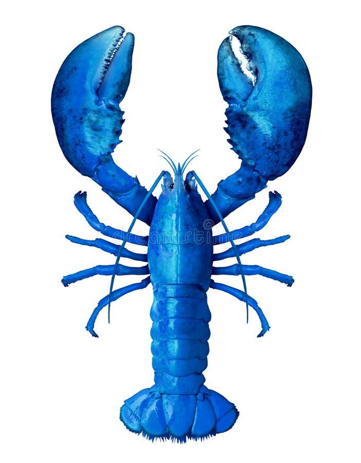 被隔绝的蓝色龙虾 库存图片