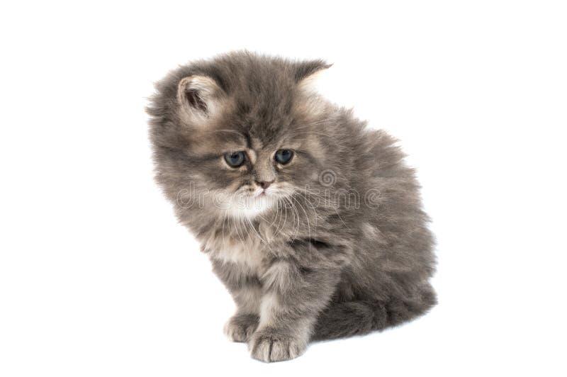 被隔绝的蓬松小猫 免版税库存照片