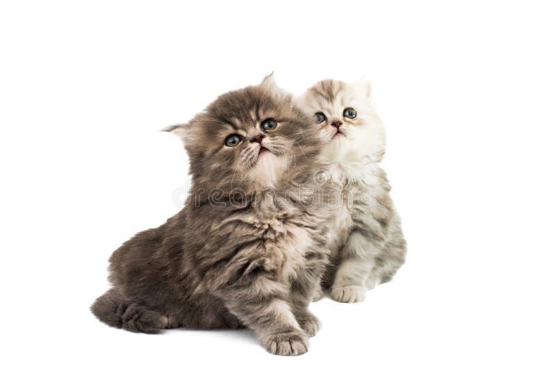 被隔绝的蓬松小猫 免版税库存图片