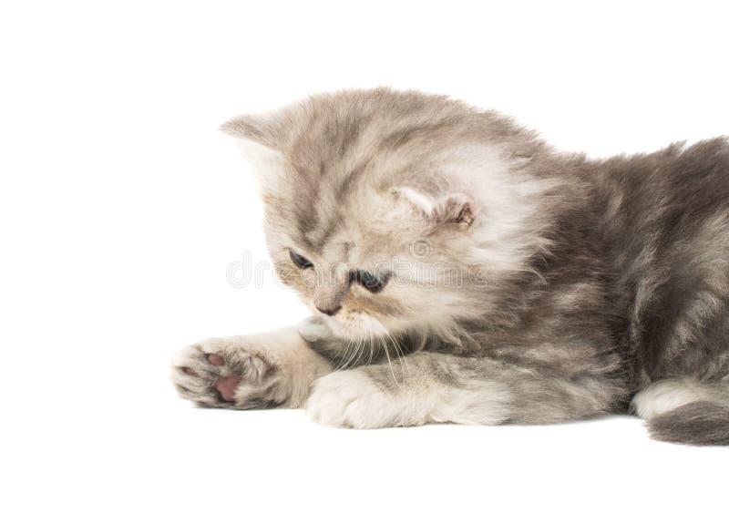 被隔绝的蓬松小猫 库存照片