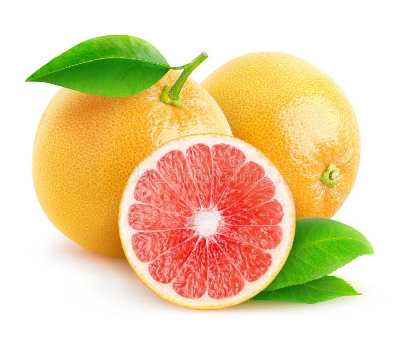 被隔绝的裁减白色葡萄柚 库存图片