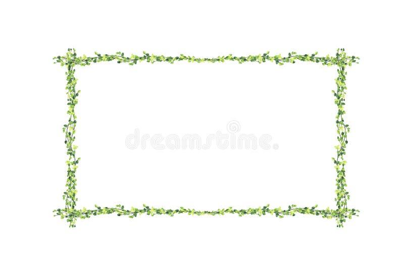 被隔绝的许多绿色榕属pumila叶子和空白的照片框架  向量例证