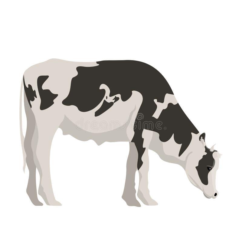 被隔绝的逗人喜爱的母牛 皇族释放例证