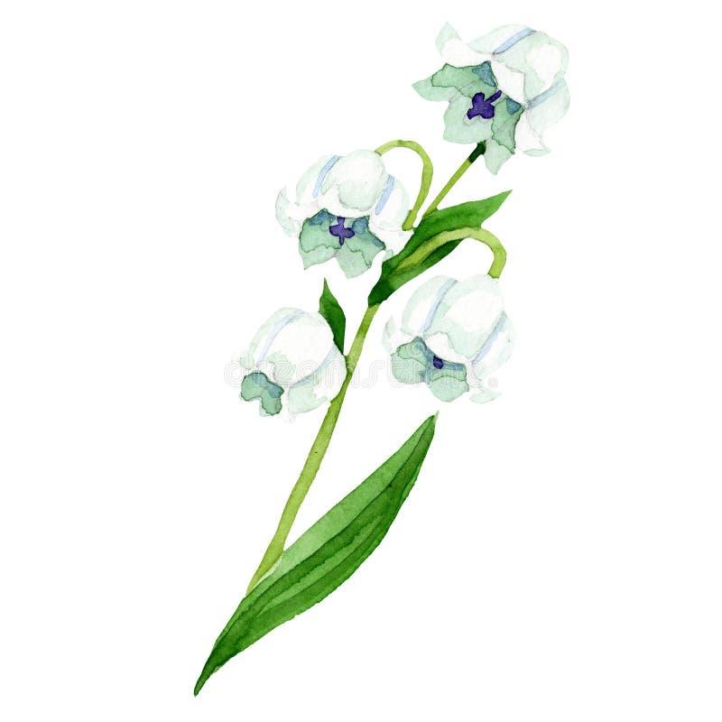 被隔绝的铃兰例证元素 花卉植物的花 水彩背景例证集合 库存例证