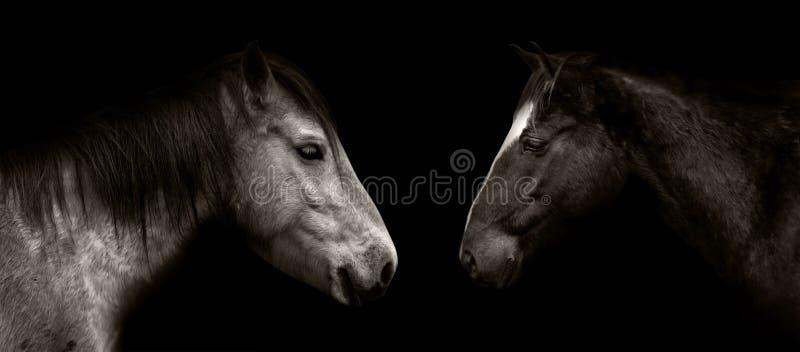 被隔绝的马画象 免版税库存图片