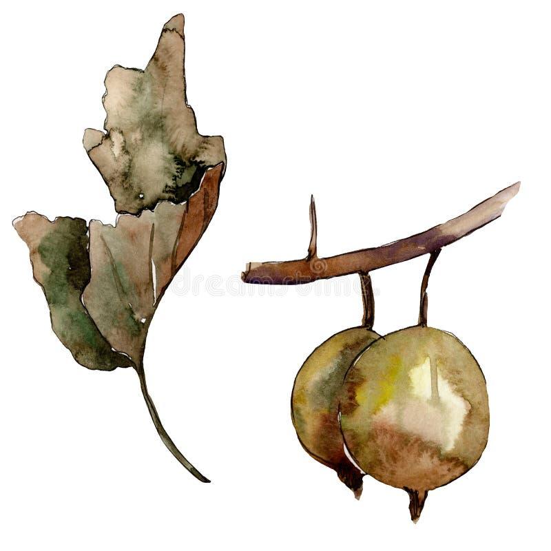 被隔绝的鹅莓健康食品 r 被隔绝的莓果例证元素 库存例证