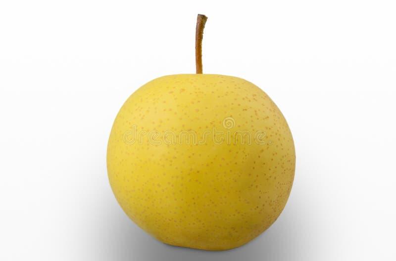 被隔绝的黄色亚洲梨品种 库存图片