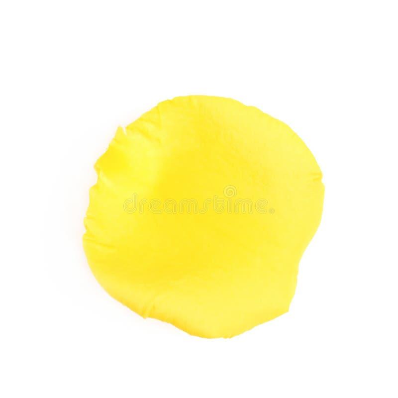 被隔绝的黄色玫瑰花瓣 免版税库存照片