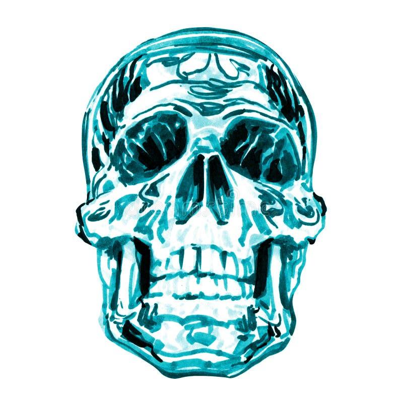 被隔绝的人的头骨,在白色的水彩例证 向量例证