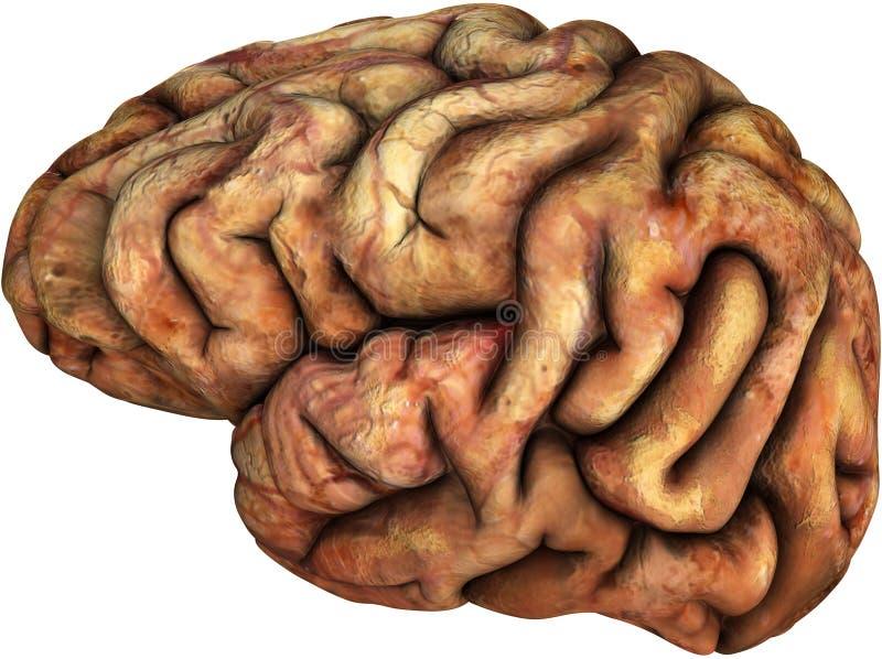 被隔绝的人脑例证,身体局部 向量例证