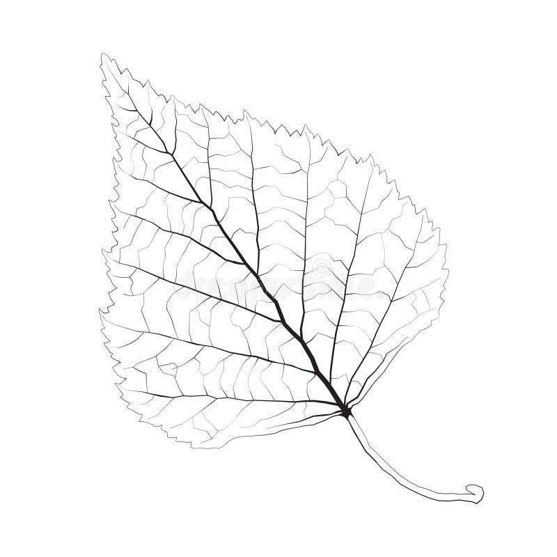 被隔绝的传染媒介单色桦树叶子 向量例证