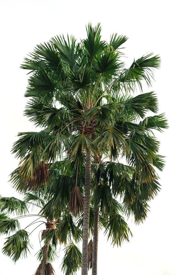 被隔绝的四棵可可椰子树 免版税库存照片