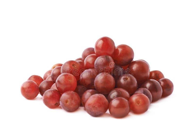 被隔绝的堆深红葡萄 库存照片
