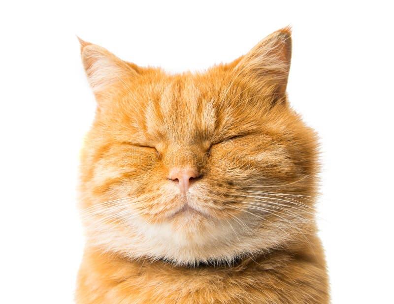 被隔绝的姜猫 库存照片