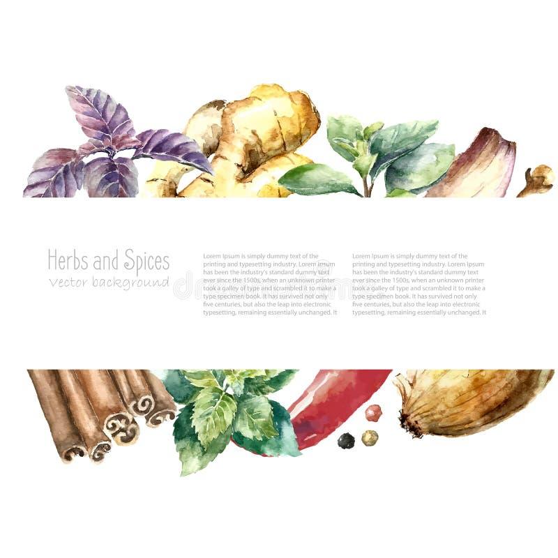 被隔绝的新鲜的草本和香料的水彩汇集 向量例证