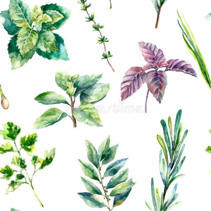 被隔绝的新鲜的草本的水彩无缝的样式 向量例证