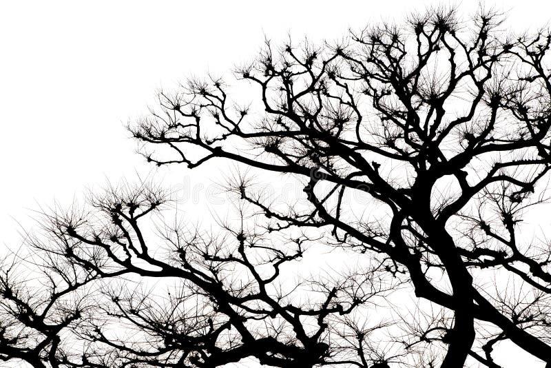 被隔绝的树和分支在黑白 免版税库存照片