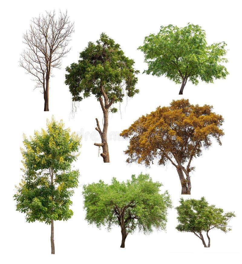 被隔绝的树的汇集在白色backgroud的 图库摄影