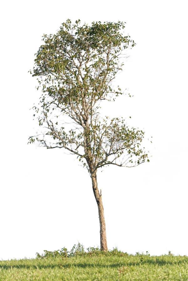 被隔绝的树 免版税库存图片