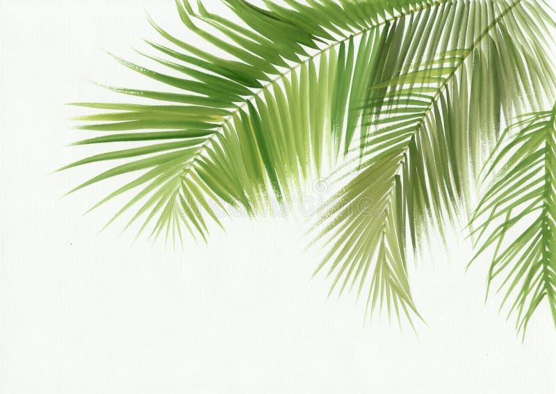 被隔绝的棕榈叶 向量例证