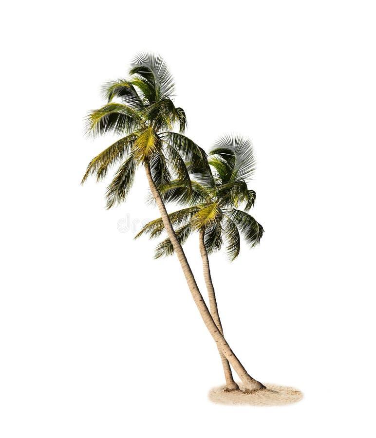 被隔绝的棕榈树 库存照片