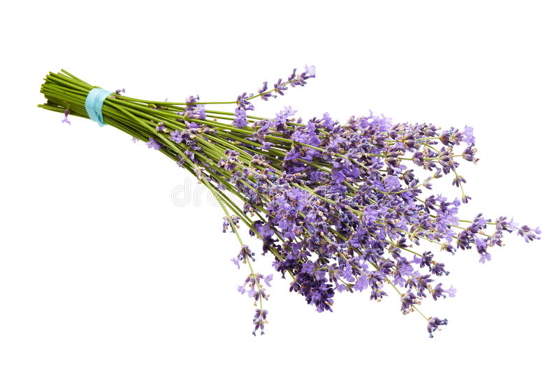 被隔绝的淡紫色花 免版税库存图片
